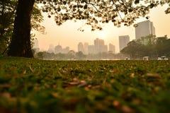 Lumpini公园在曼谷,泰国 图库摄影