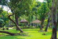 Lumpini公园的,泰国Lumpini湖 免版税库存图片