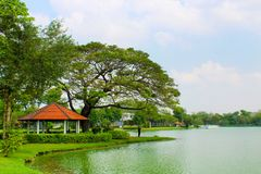 Lumpini Lake at Lumpini Park, Thailand. Lumpini Lake is the center of Lumpini Park in Thailand. The Park is known for its flora and fauna. This picture features Stock Image
