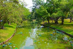 Lumpini Lake at Lumpini Park, Thailand. Lumpini Lake is the center of Lumpini Park in Thailand. The Park is known for its flora and fauna. This picture features Royalty Free Stock Photography
