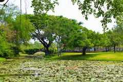 Lumpini Lake at Lumpini Park, Thailand. Lumpini Lake is the center of Lumpini Park in Thailand. The Park is known for its flora and fauna. This picture features Stock Photos