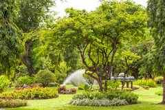 Lumpini park Royalty Free Stock Photo