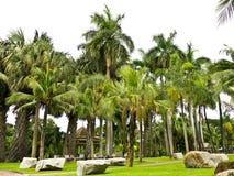 Lumpini public park in bangkok Stock Image