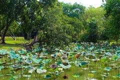 Lumpinimeer bij Lumpini-Park, Thailand stock foto's