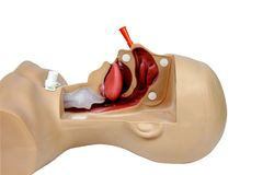 Lun adulto paciente da unidade dos nares da sução médica do treinamento da simulação Foto de Stock Royalty Free