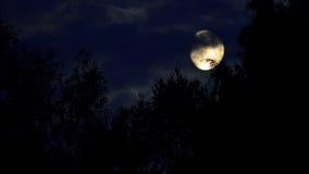 Luna Imagen de archivo libre de regalías