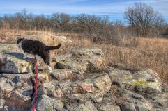 Luna the Adventure kitty Explores the World. Luna the Adventure Kitty is a feline explorer who travels the midwest and beyond looking for new things to see and stock photo