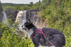 Luna the Adventure kitty Explores the World stock images