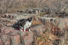 Luna the Adventure kitty Explores the World. Luna the Adventure Kitty is a feline explorer who travels the midwest and beyond looking for new things to see and stock image