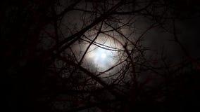 Luna attraverso i rami video d archivio
