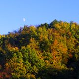 Luna in aumento sulla foresta autunnale Immagine Stock