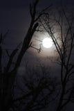Luna con i rami nudi, immagine verticale del lupo Immagine Stock