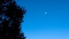 Luna con l'albero Immagini Stock Libere da Diritti