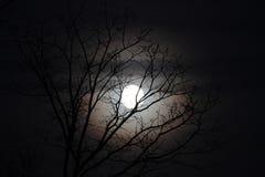 Luna con las ramas desnudas, halo redondo del lobo Foto de archivo libre de regalías