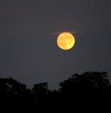 Luna de la noche Foto de archivo