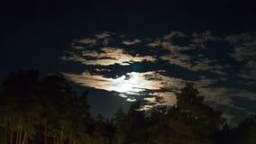 Luna de la noche que sube en el horizonte sobre los árboles y las nubes Lapso de tiempo metrajes