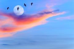 Luna de la puesta del sol de las siluetas de los pájaros Foto de archivo
