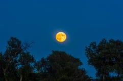 Luna de la sangre sobre hilera de árboles Imagen de archivo libre de regalías