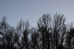 Luna del cielo nocturno entre árboles Foto de archivo libre de regalías