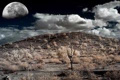 Luna del deserto della sonora Immagine Stock Libera da Diritti