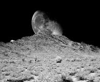 Luna del desierto Imagen de archivo