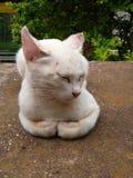 Luna del gatto fotografia stock libera da diritti