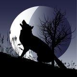 Luna del lupo Fotografia Stock