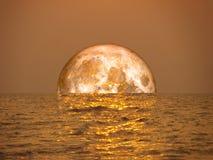Luna della razza pura arancione-chiaro sulla luce di luna di riflessione del mare su sur Fotografia Stock
