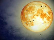 Luna della razza pura e gruppo eccellenti di volo dell'uccello sul cielo notturno Fotografia Stock