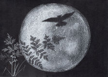 Luna dello sciocco e del gufo Siluetta Fotografia Stock Libera da Diritti