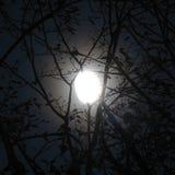 Luna detrás de ramificaciones Imágenes de archivo libres de regalías