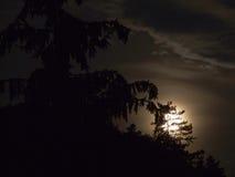 Luna detrás del árbol fotos de archivo libres de regalías