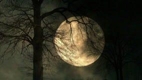 Luna detrás del árbol fondo de la noche del misterio