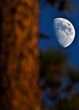 Quella non è luna! Fotografie Stock