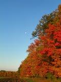 Luna di giorno sopra la siepe di arbusti di autunno nel colore pieno Fotografia Stock