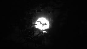 Luna di Halloween Fotografia Stock