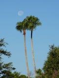 Luna di mattina in tropici Immagine Stock
