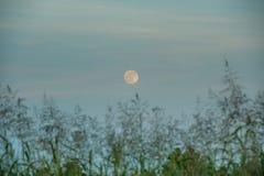 Luna di raccolto Fotografie Stock