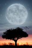 Luna di Twight Fotografia Stock