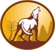 Luna di urlo del cane selvaggio del lupo Fotografie Stock Libere da Diritti