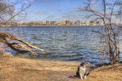 Luna die Abenteuer-Miezekatze ist ein katzenartiger Forscher, der der Mittelwesten und über dem Suchen neuen Sachen, um und nach  stockfoto