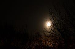 Luna dietro gli alberi immagini stock