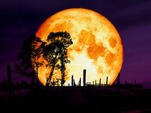 luna eccellente del sangue blu sopra l'albero della siluetta del pilastro di abbandono immagini stock libere da diritti