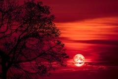 luna eccellente del sangue indietro sull'albero della siluetta su cielo notturno fotografie stock