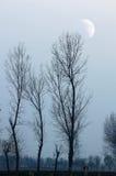 Luna ed alberi Fotografia Stock