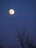 Luna ed albero Fotografia Stock Libera da Diritti