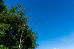 Luna en el cielo claro de la mañana foto de archivo libre de regalías