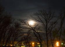 Luna en los árboles Fotografía de archivo libre de regalías