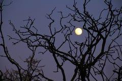 Luna en una interacción mágica Fotos de archivo libres de regalías