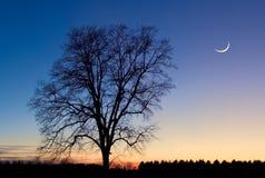 Luna esquelética del árbol y de la crescent Imágenes de archivo libres de regalías